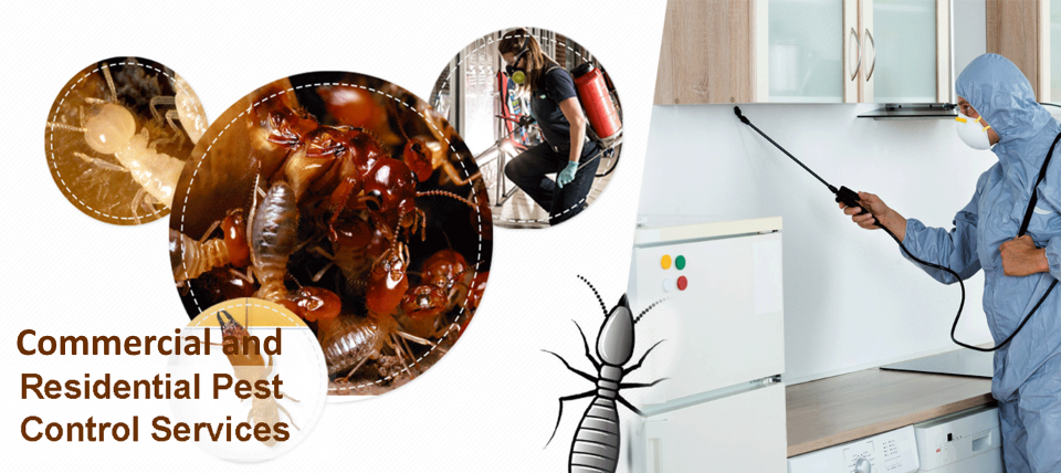 Commercial and residential pest control
